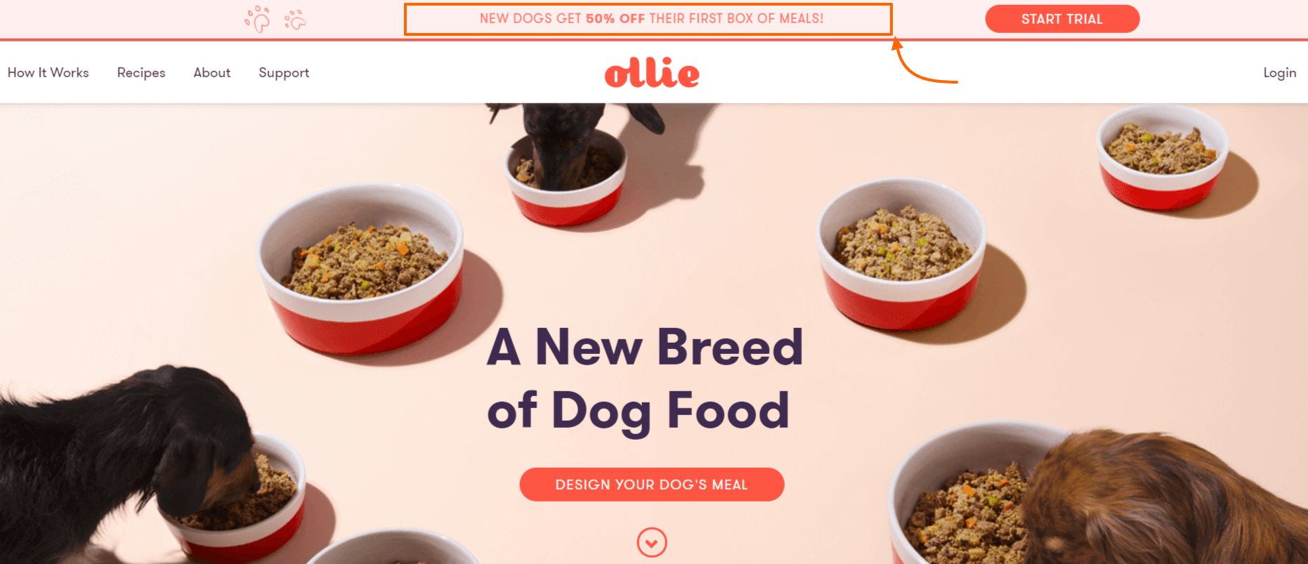 Ollie Coupon Codes- The best dog nutrition